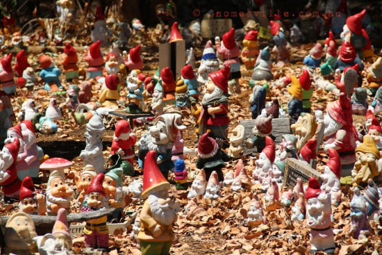 Thousands of Gnomes at Gnomesville